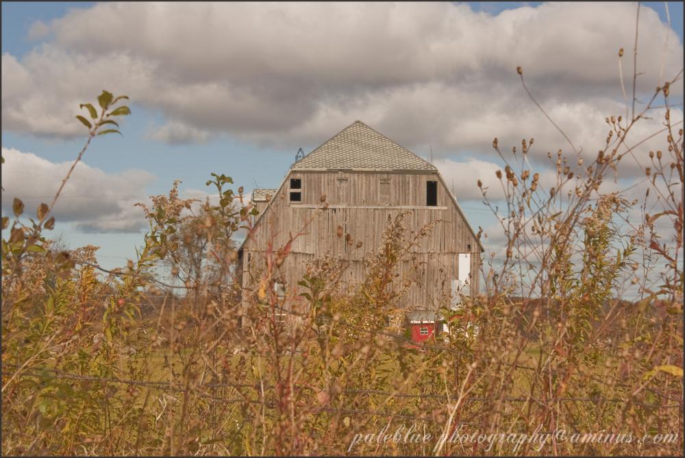 Ontario Barns III