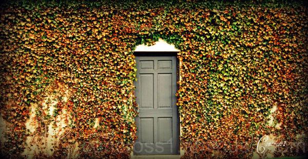 Door To No Where