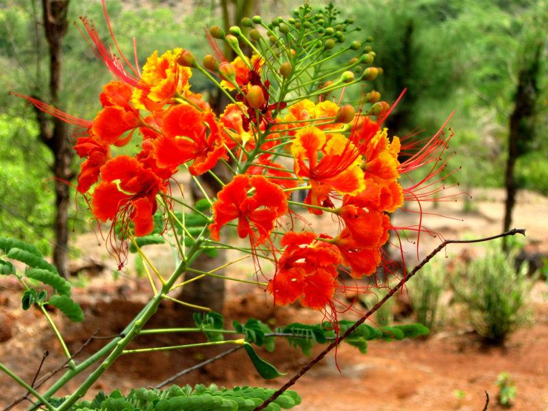 Shankasur
