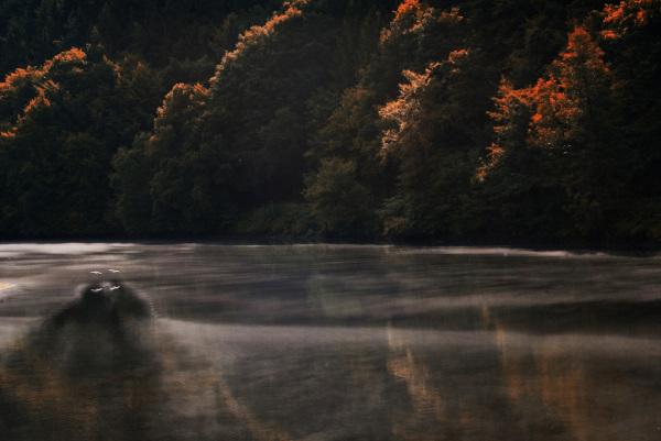 Nebel über dem Wasser