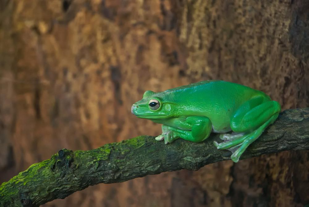 Der Grüne