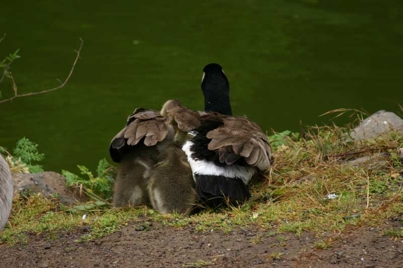 Mom with Kids