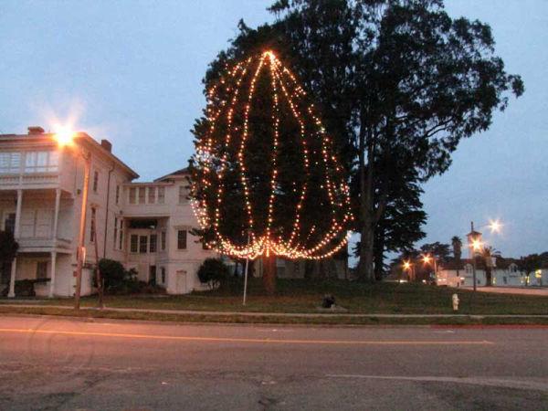 Lights on Tree