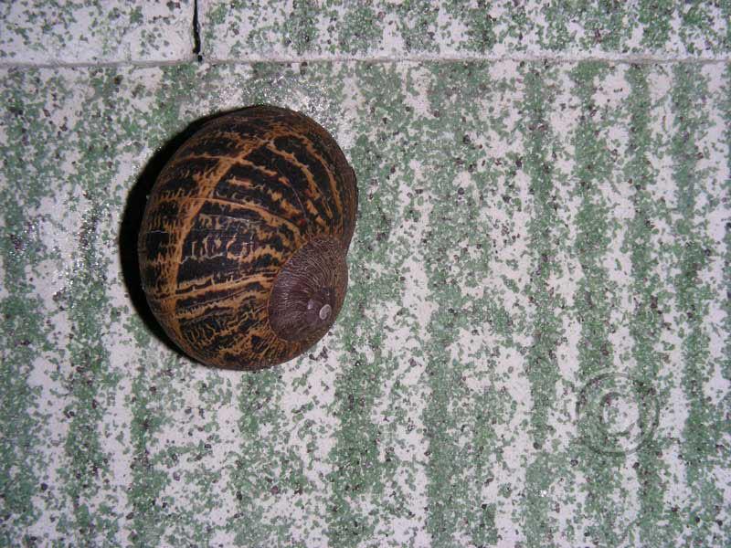 Snail Resting