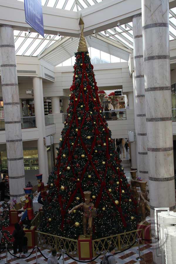 Christmas Tree December 2010