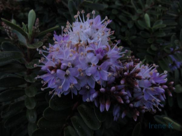 Plant/Flower #6A