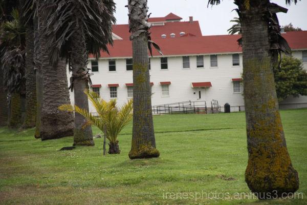One Midget Palm Tree