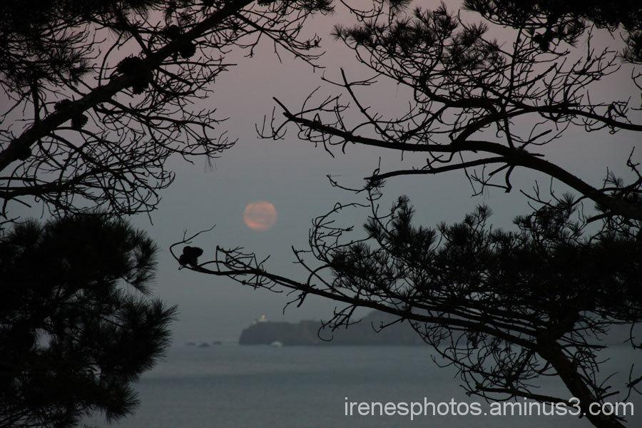 Morning Moon #3
