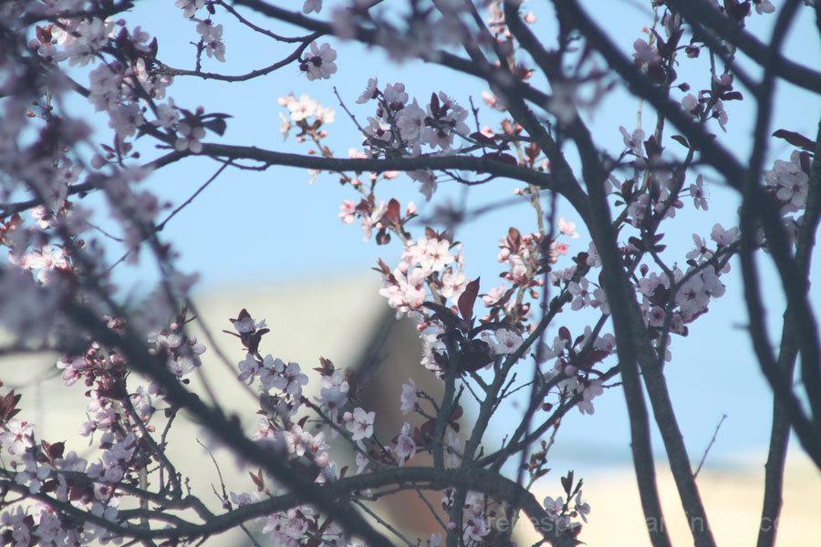 Plum Blossom Tree Two