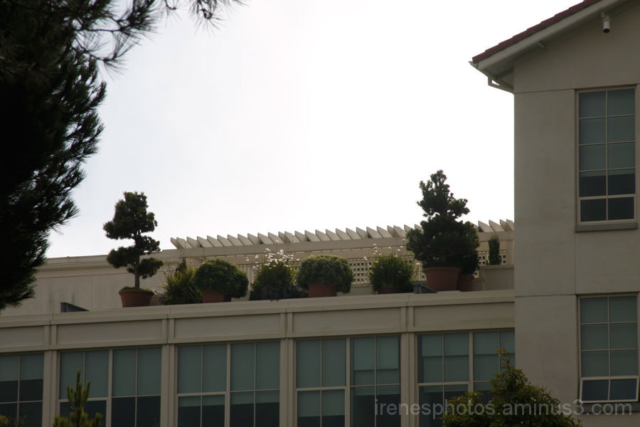 Roof Top Planted Pots