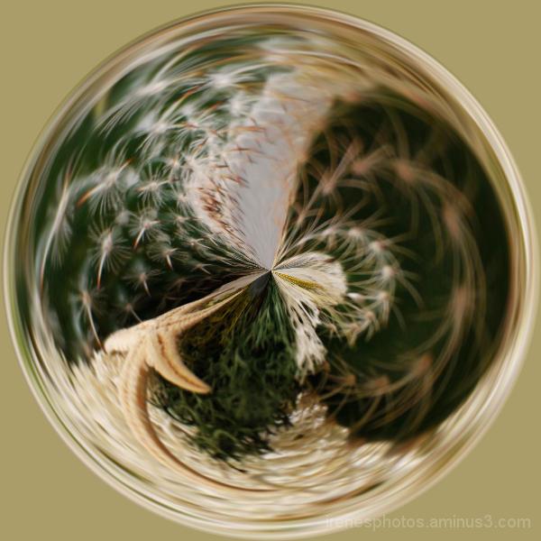 Cacti Ball