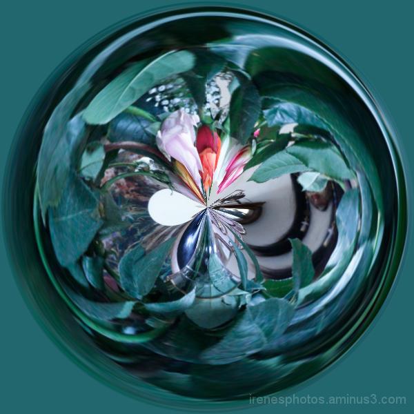 Roses Circle