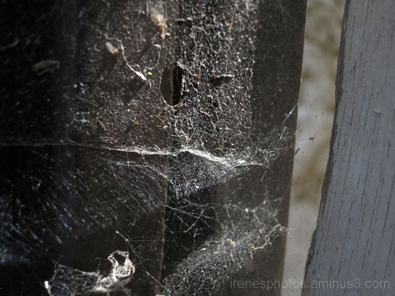 Spider Web in Backyard