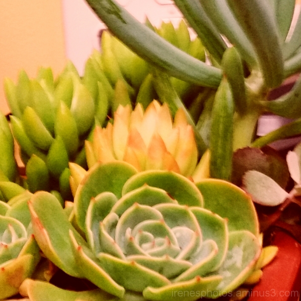 Succulent At The YMCA