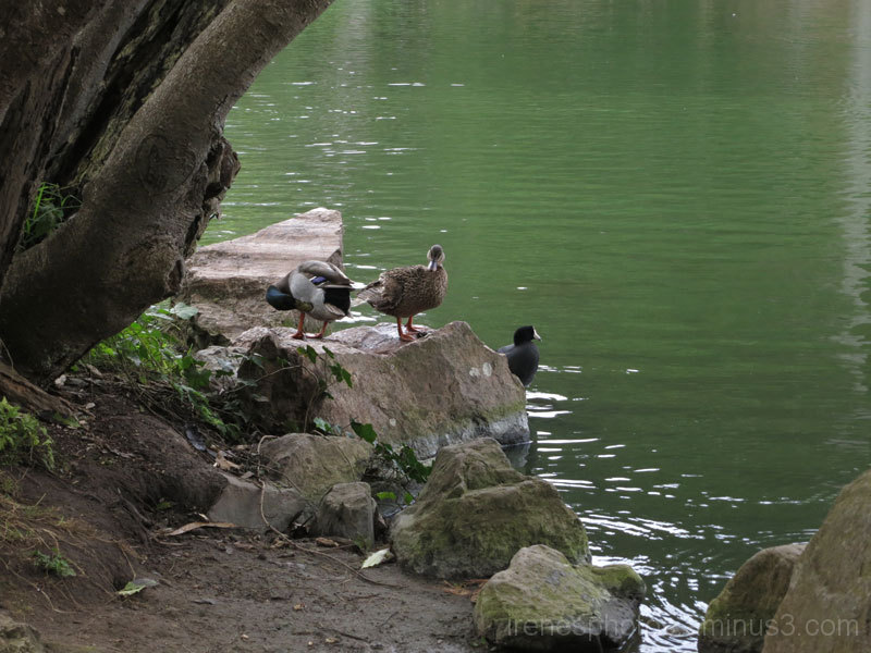 Stow Lake on October 19, 2014