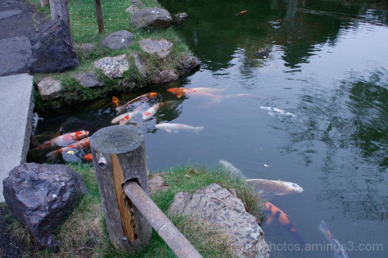 Japanese Tea Garden #7