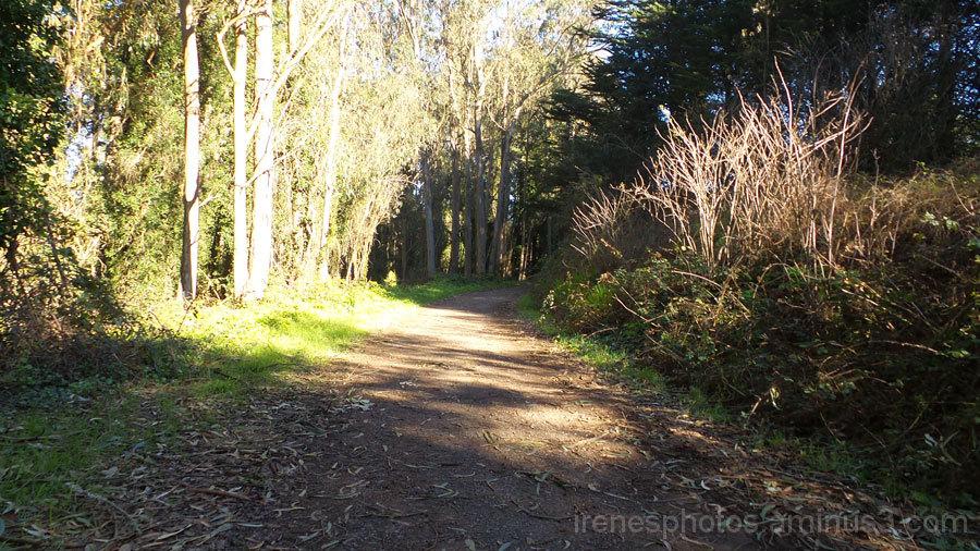 Short Hike on January 1, 2015