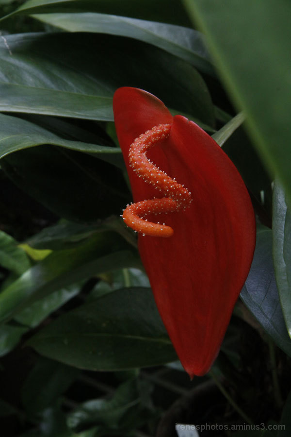 Conservatory of Flowers #4