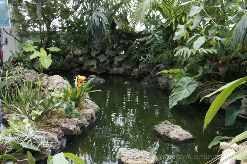 Conservatory of Flowers #5