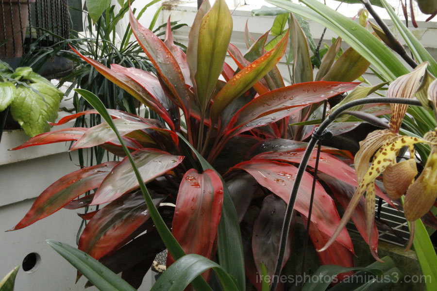 Conservatory of Flowers #7