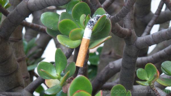 Close up of Cigarette