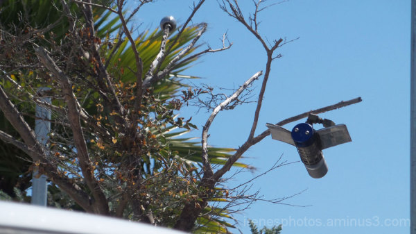 Silver Bird? Drone?