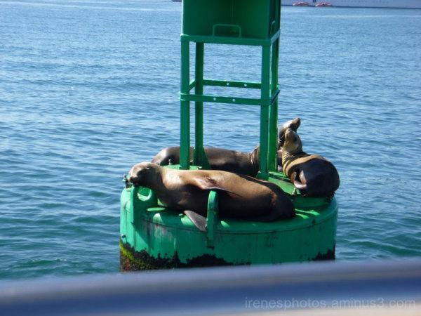 Adventure to Ensenada, Mexico #12