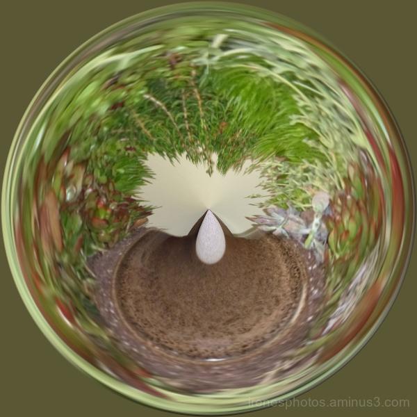 Plant Circle