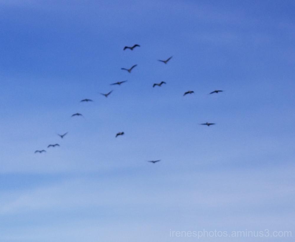 Bunch of Birds Flying