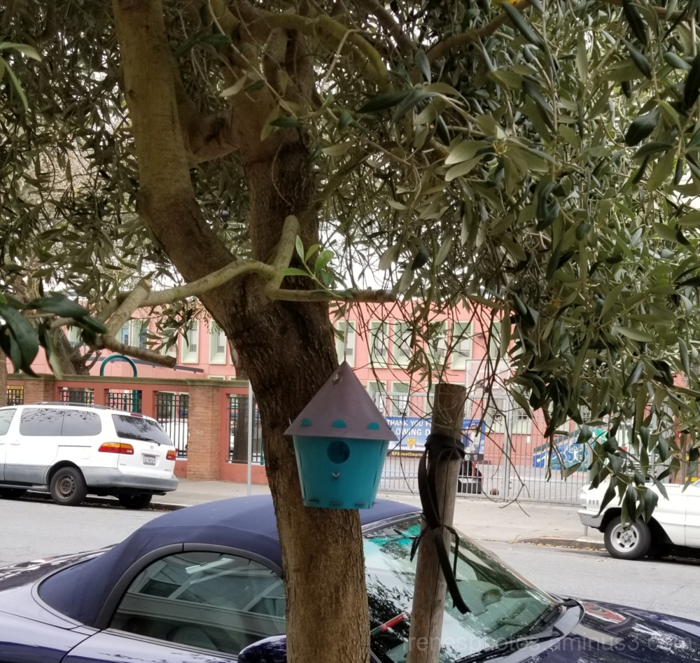 Exposed Birdhouse