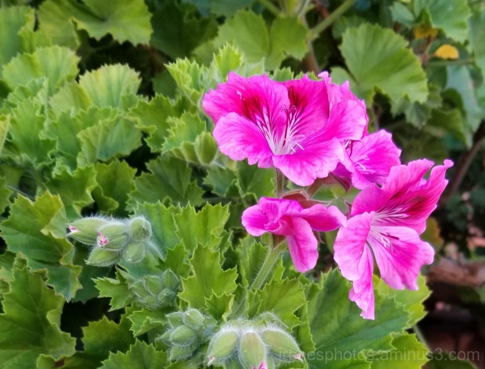 Flowers & Buds