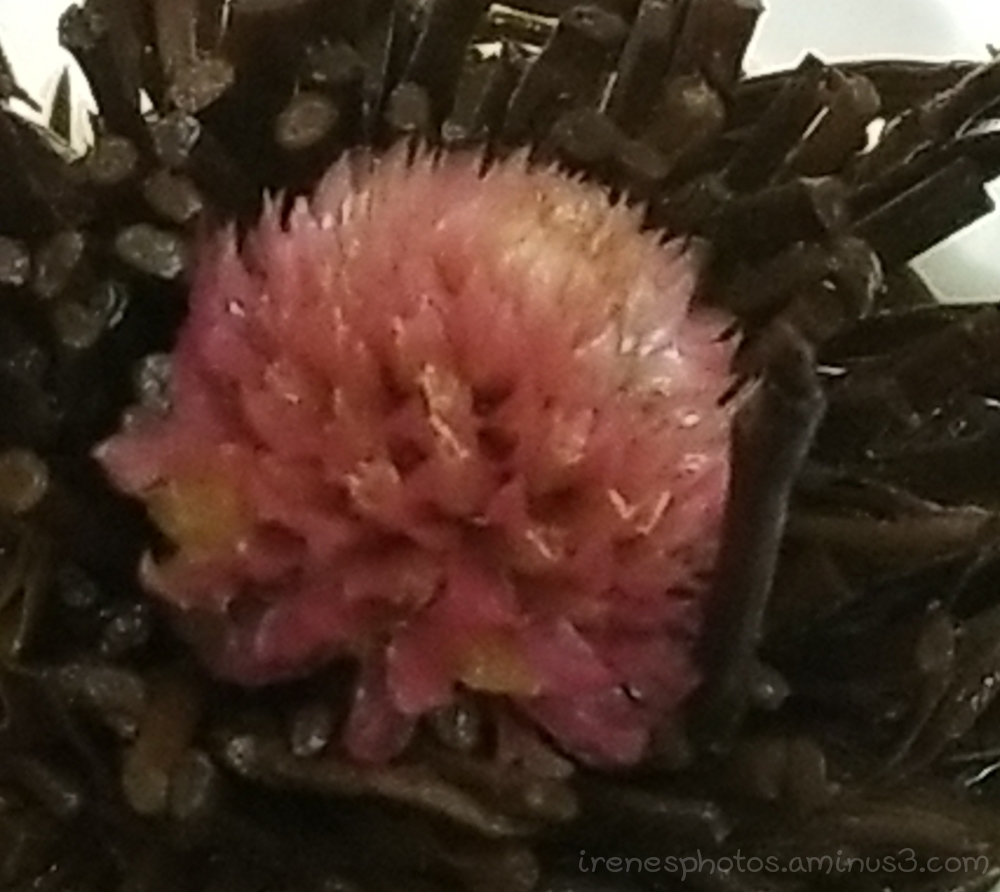 Finished Red Bloom Tea