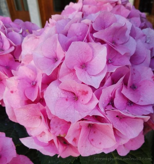 Flower on 08.04.2018