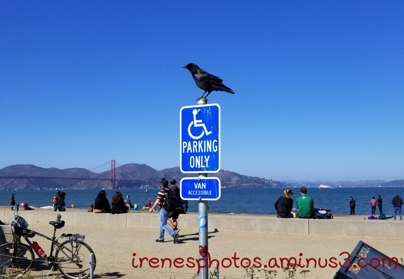 ST - Perched on Sign