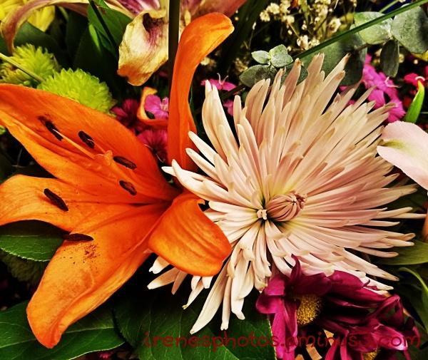 Flowers on 01.22.2019