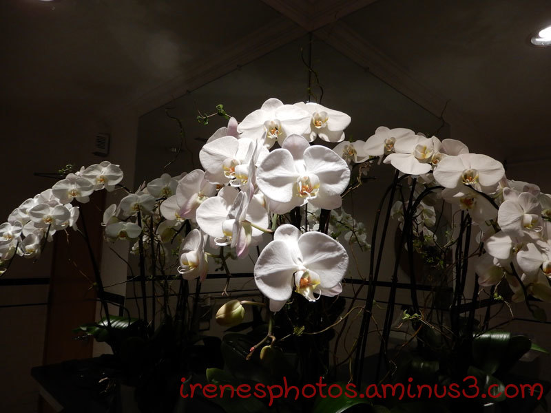 Orchids on 04.11.2019