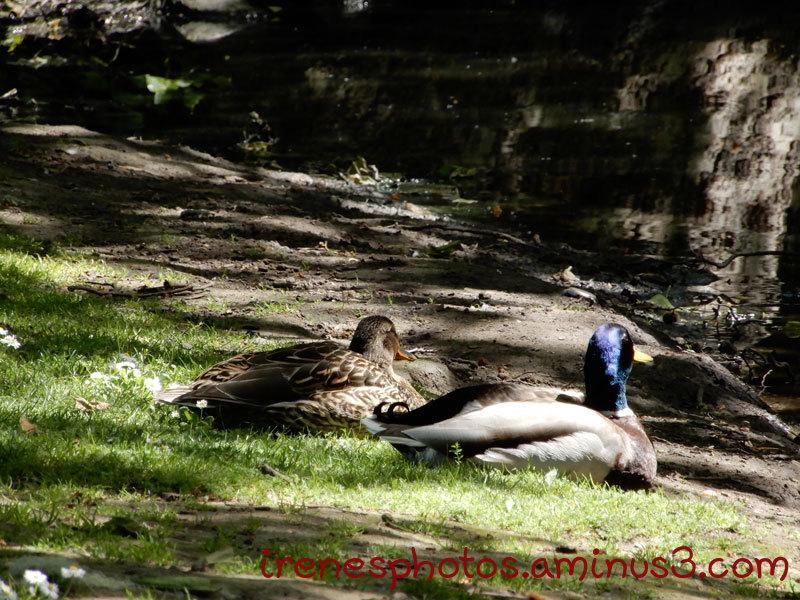 Two Ducks Enjoying The Sun