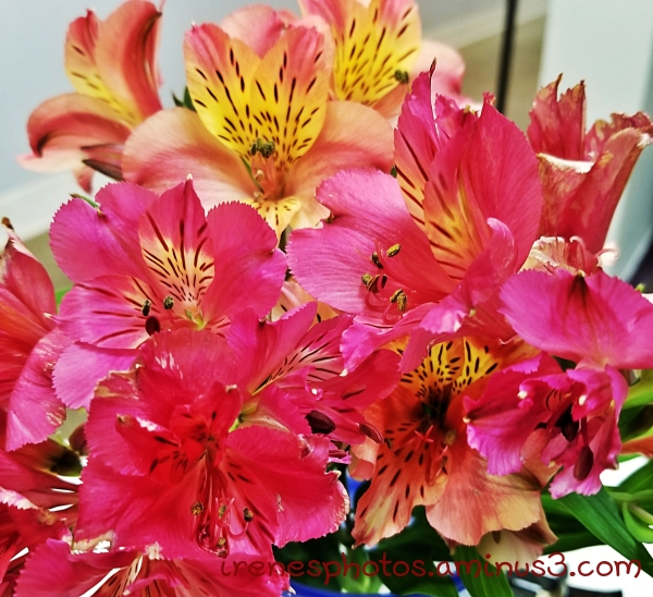 Flowers on 05.11.2019