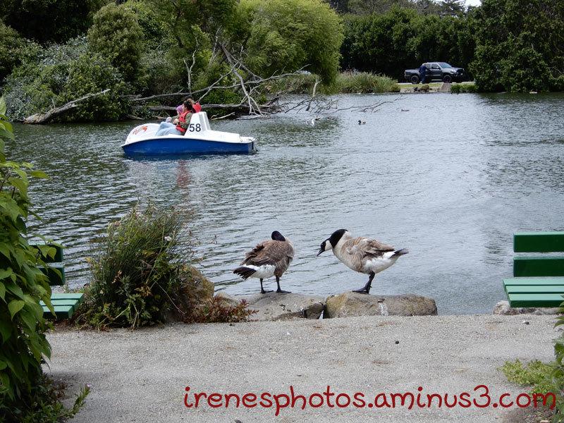 At Stow Lake