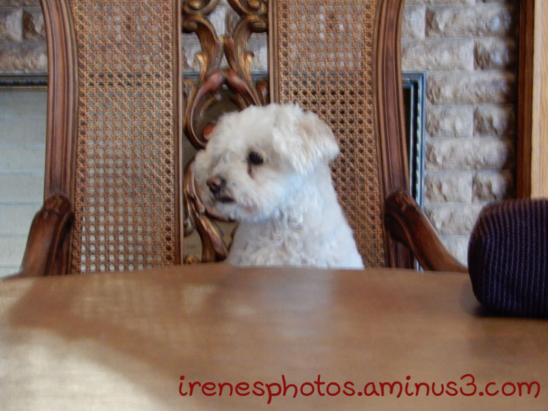 Who's at The Head of the Table?  --  ST