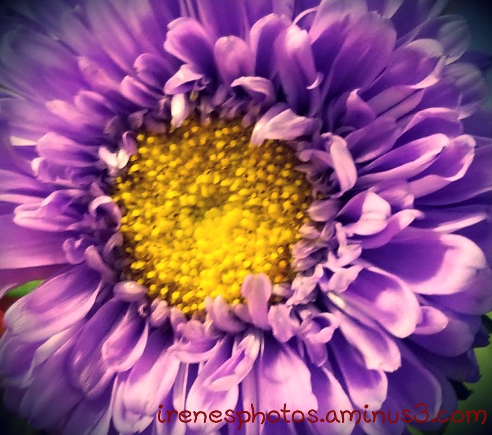 Flower on 07.28.2019