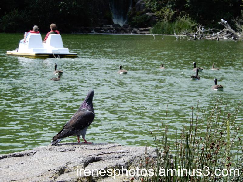 Pigeon Overlooking Things