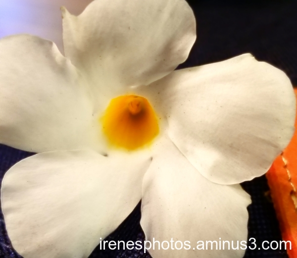 Nice Smelling Flower