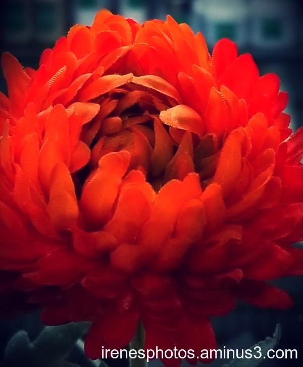 Flower on 09.28.2019 2/2