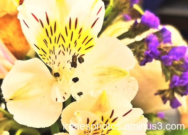 Flowers on 01.04.2020