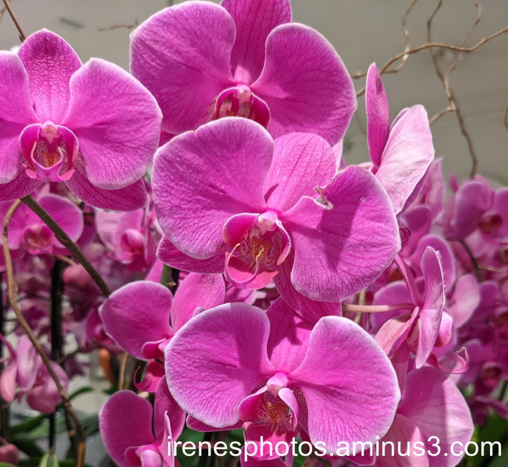 Orchids on 05.13.2021