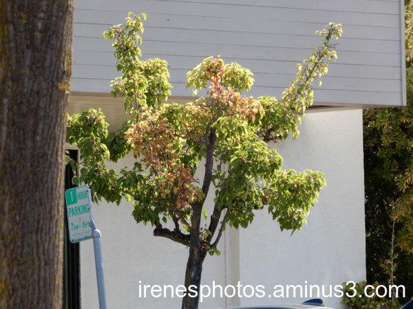 Changing Tree