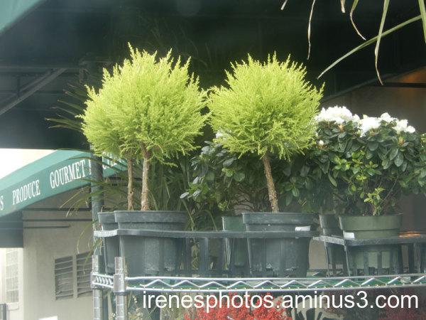 Plants on 10.05.2021