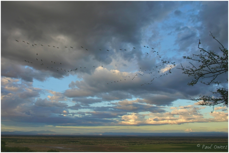 Kenya sky birds wildlife reserve