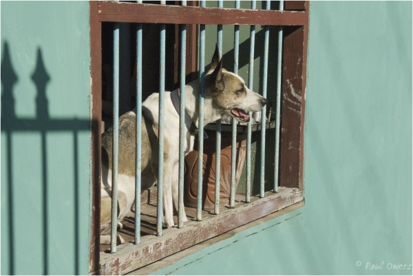 Dog watching playground, Sancti Spiritus, Cuba